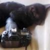 Cat&Photo - o meu Projecto - última mensagem por CatAndPhoto